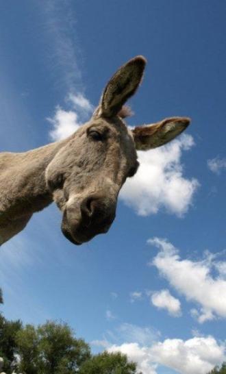 Donkey - 02