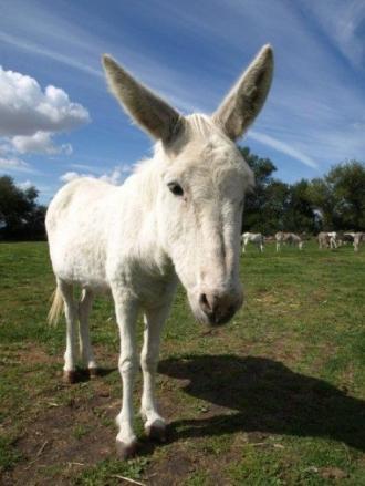 Donkey - 03