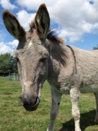 Donkey - 04