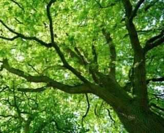 Millenium Wood